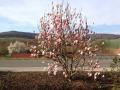 Frühling-1