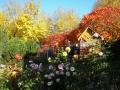 Herbst-im-Garten-2